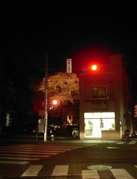 近所のライトアップ桜。