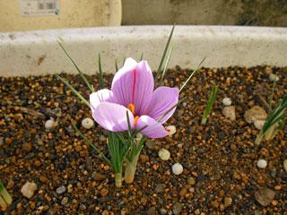 かわいいお花…が終了した後、葉っぱが伸び放題に伸びるところが恐ろしい