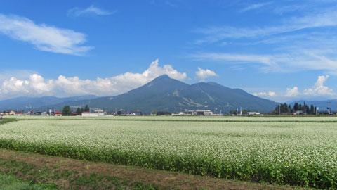 ソバ畑と磐梯山